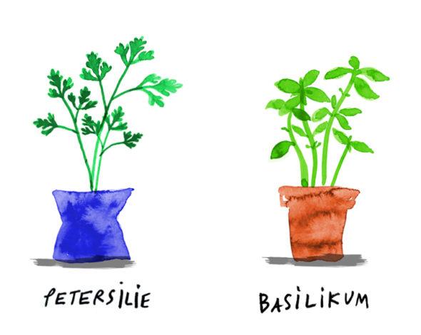 Gezeichnet: vier Blumentöpfe mit Rosmarin, Petersilie, Basilikum und Koriander