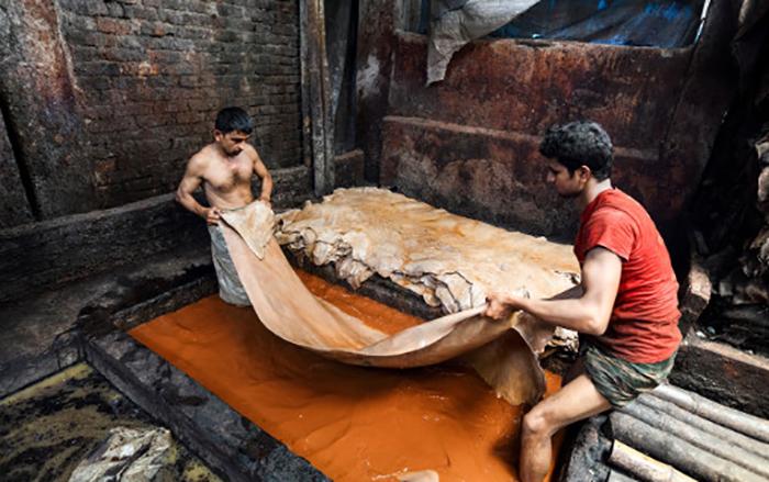 Arbeiter ohne Schutzkleidung bei Ledergerben