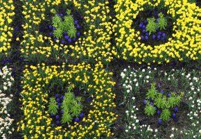 Blütenfeld Botanischer Garten München-Nymphenburg